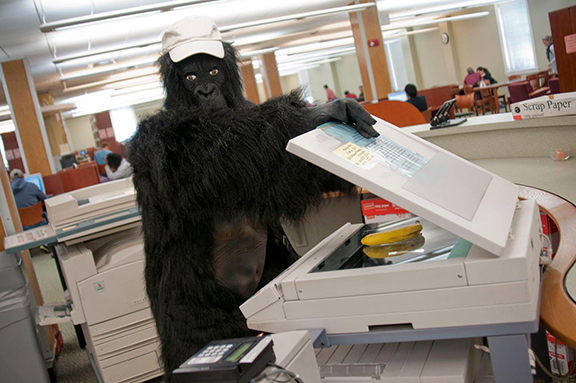 gorilla_employee